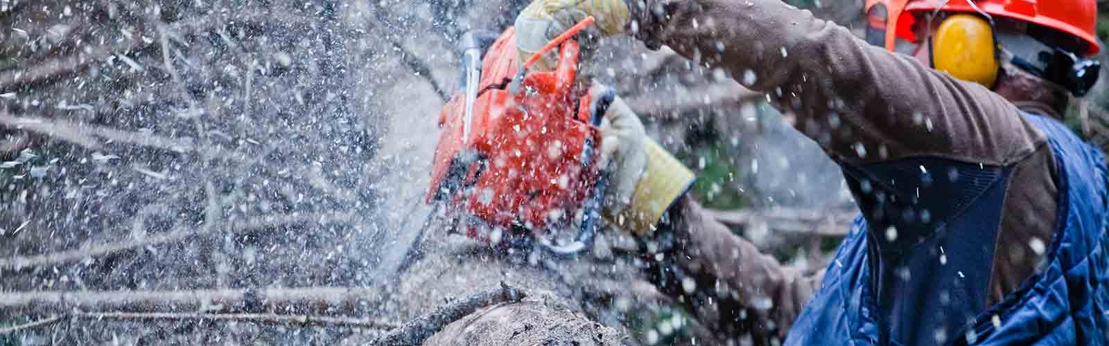 Baumpflege Rohrbeck - Baumkronen einkürzen