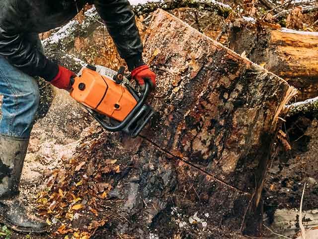 Baumpflege Rohrbeck - Baumfällung