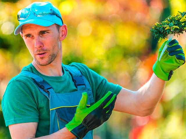 Baumpflege Rohrbeck - Baumgutachten