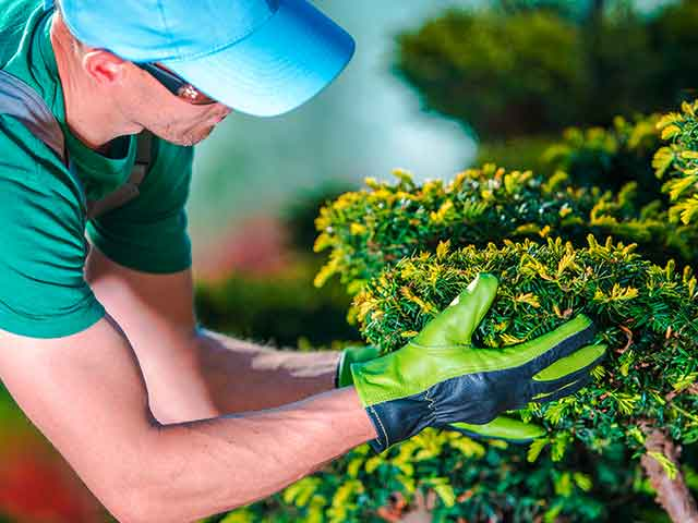 Baumpflege Rohrbeck - Baumkontrolle