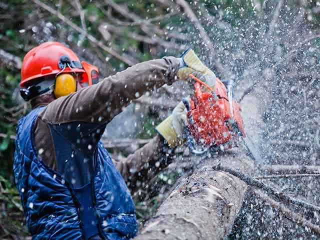Baumpflege Rohrbeck - Kroneneinkürzung