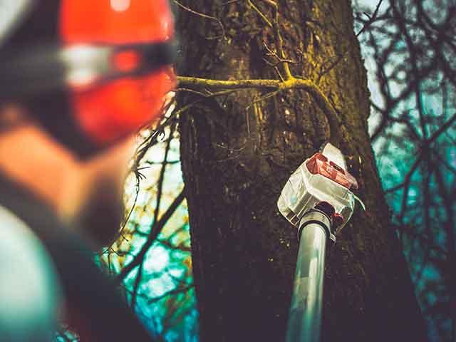 Baumpflege Rohrbeck - Kronenpflege