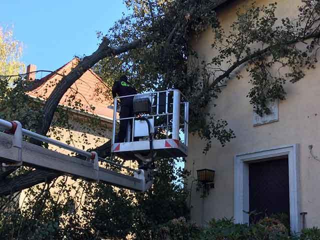 Baumpflege Rohrbeck - Fassadenfreischnitt