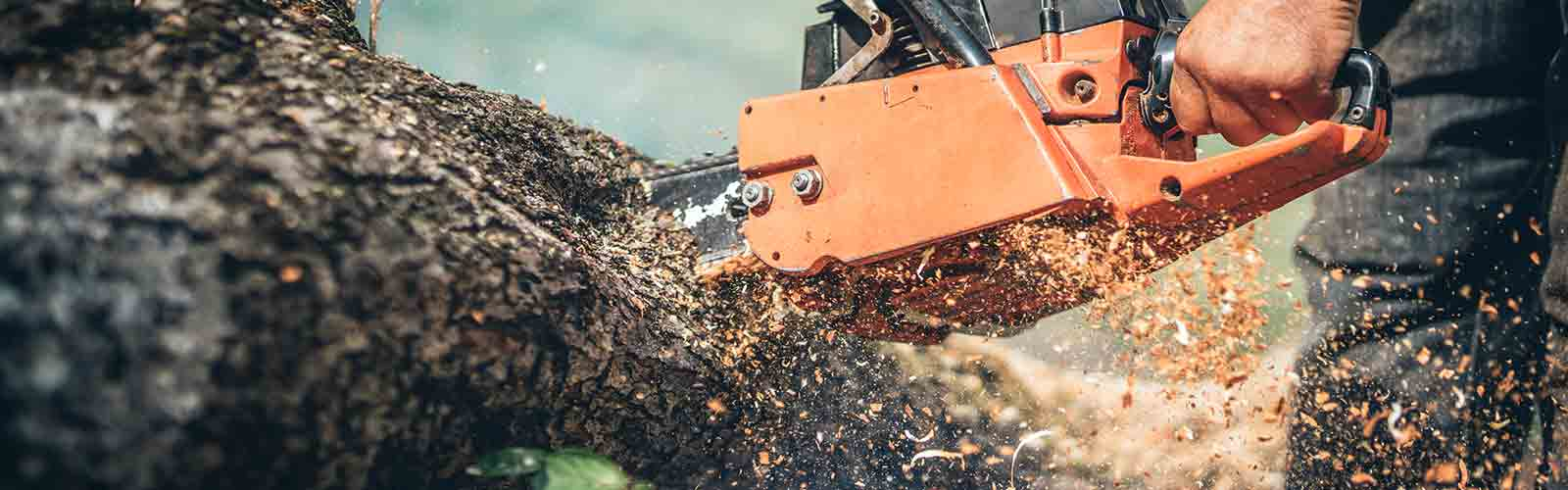 Baumpflege Rohrbeck - Baumsägearbeiten mit Kettensäge