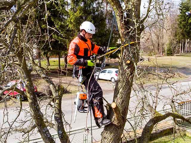 Baumpflege Rohrbeck - Seilklettertechnik