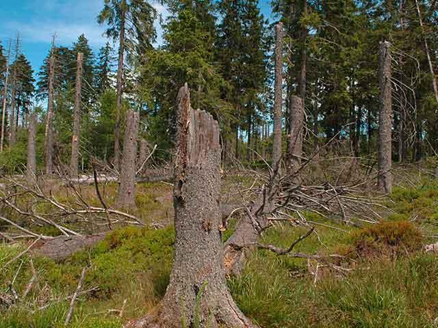 Baumpflege Rohrbeck - Totholzentfernung