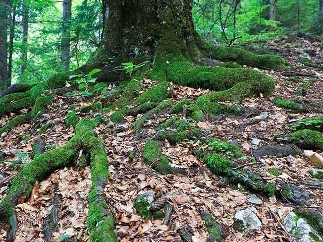 Baumpflege Rohrbeck - Wurzelentfernung
