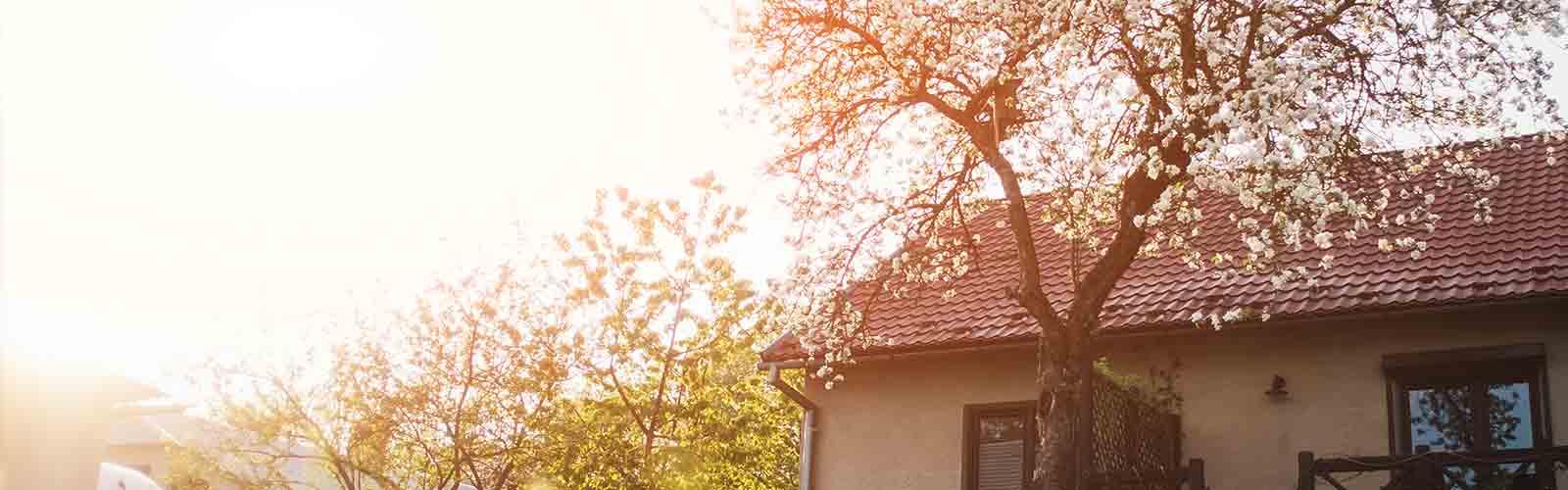 Baumpflege Rohrbeck - Dach- und Fassadenfreischnitt