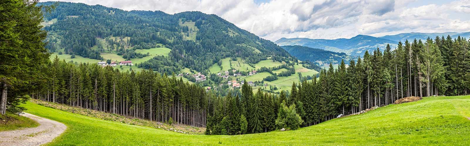 Baumpflege Rohrbeck - Forstbetrieb
