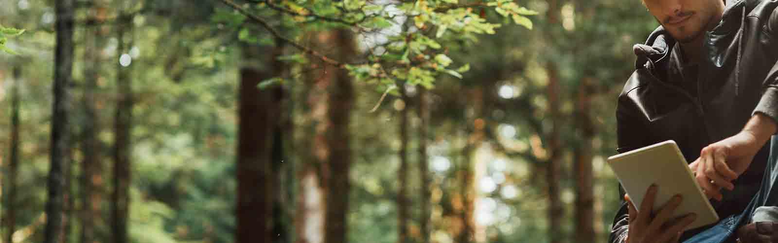 Baumpflege Rohrbeck - Kontrolle von Bäumen