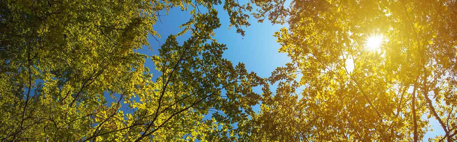 Baumpflege Rohrbeck - Auslichtung von Baumkronen