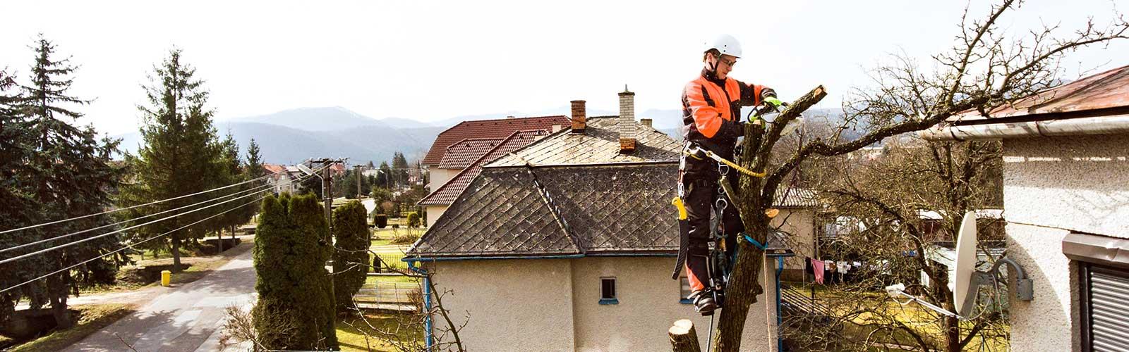 Baumpflege Rohrbeck - Baumfällen und pflegen mit Klettertechnik