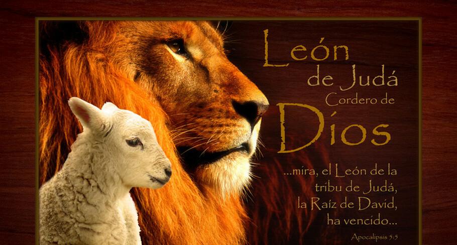 sinagoga leon de juda leon de judah