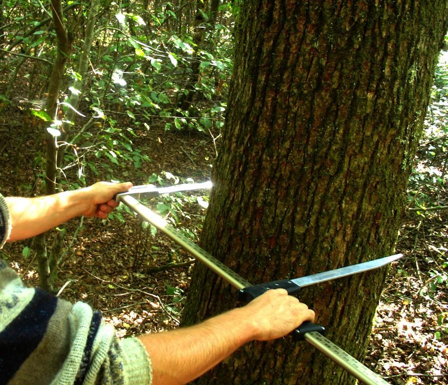 Agence Forestière, gestion d'espaces naturels
