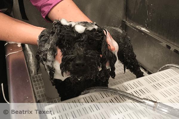 Im Hundestübchen wird die Hundehaut mit Hundeshampoos aus natürlichen Kräuterextrakten gewaschen.
