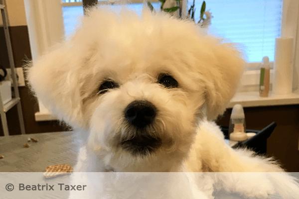 Das Reinigen der Hundeohren und die Pflege der Augenzone gehören zu einer liebevollen Hundepflege dazu.