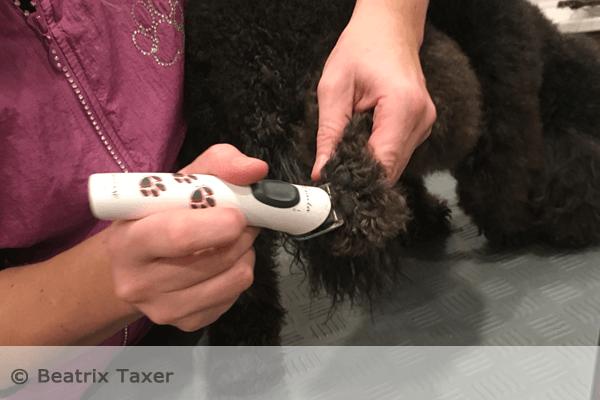 Hunde aller Größen, Altersstufen und Rassen vertrauen Beatrix Taxer und lassen sich vom Profi ihre Krallen kürzen.