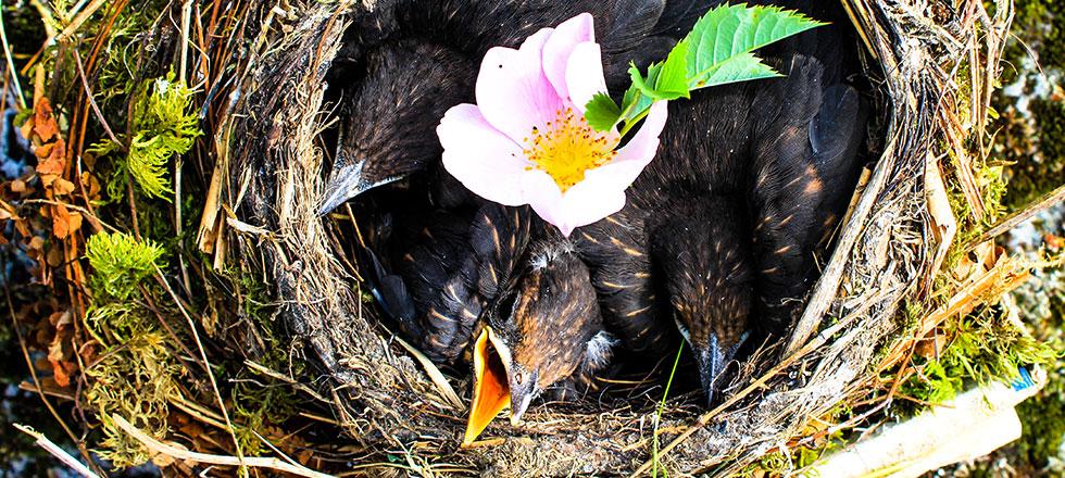 Ein Vogelnest nach dem die 3B Denmalpflege & Bausanierung GmbH das Nest umgesetzt hat.