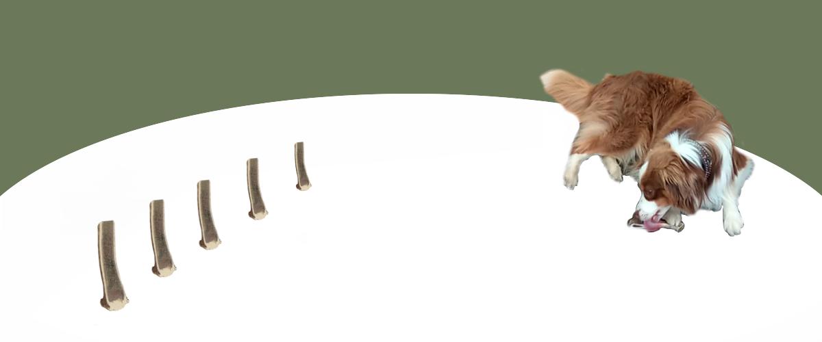 Hunde Kauknochen aus Hirschgeweih