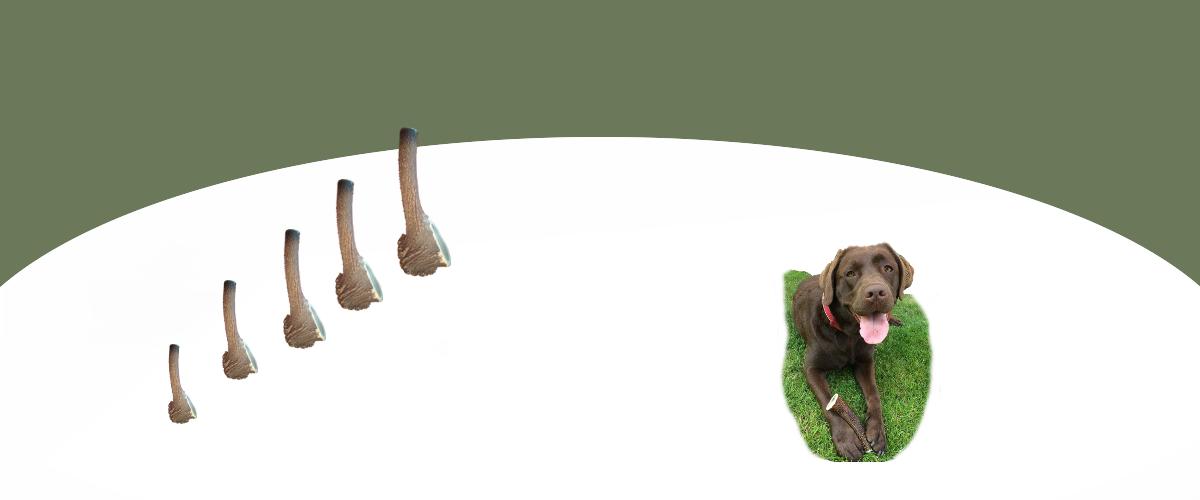Kauknochen aus Hirschgeweih
