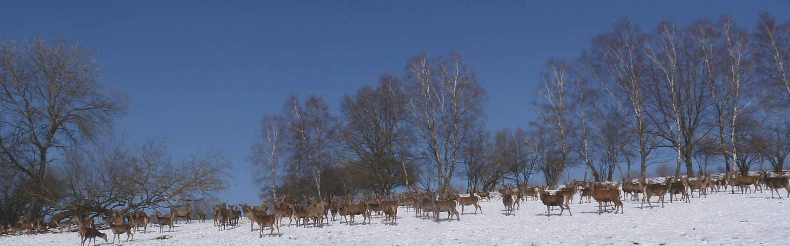 Wildgehege Weidner Lohrhaupten Steinfeld