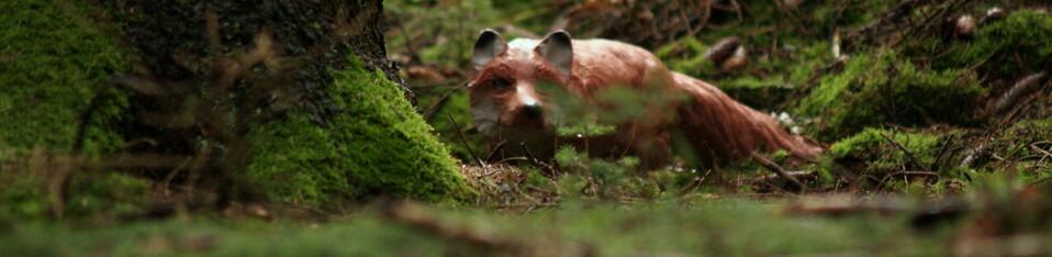 Vossenacker Fuchsjagd @ am Hochseilgarten Hürtgenwald   Hürtgenwald   Nordrhein-Westfalen   Duitsland
