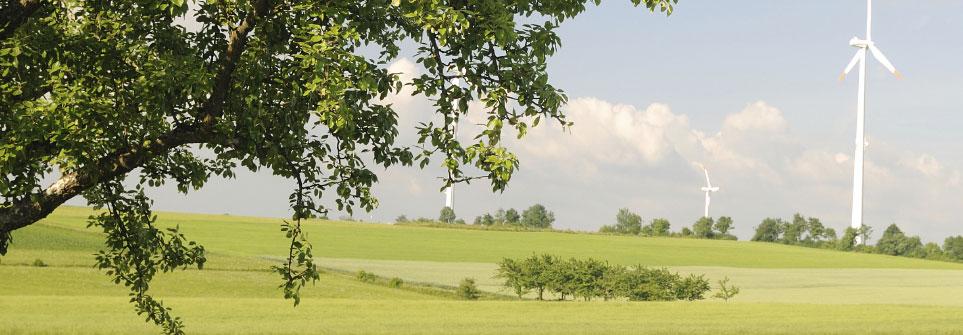 Feld mit Baum und Windrad