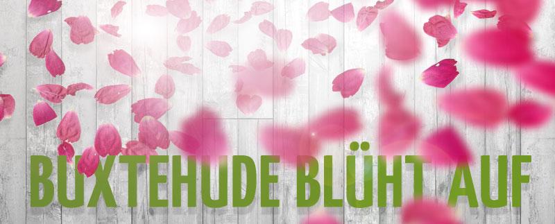 Buxtehude blüht auf