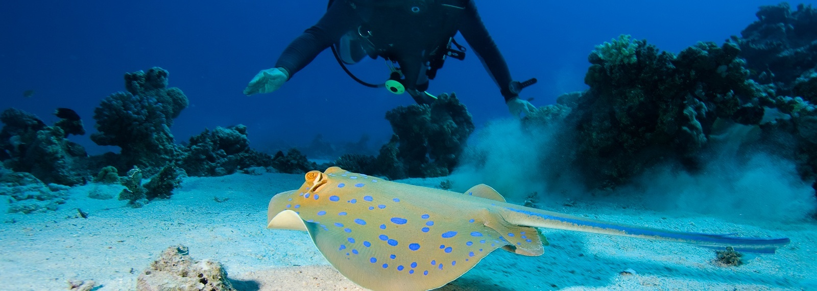 Scuba Diving Tours from Varadero