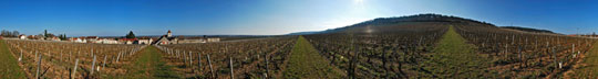 Clos de Tart in March