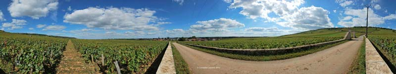 Grande Rue and Romanee-Conti-harvest 2012