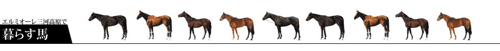 エルミオーレ三河高原で暮らす馬:所属馬の紹介