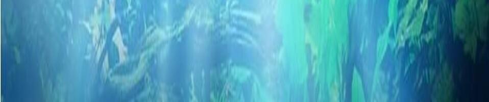 Aquarienverein Aquarienfreunde Stellingen
