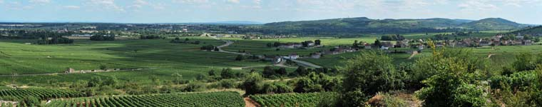 Between Chassagne-Montrachet and Puligny-Montrechet in July, 2009