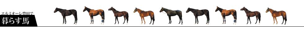 エルミオーレ豊田で暮らす馬:所属馬の紹介
