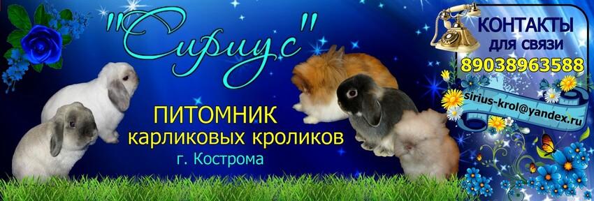 Питомник карликовых кроликов Сириус