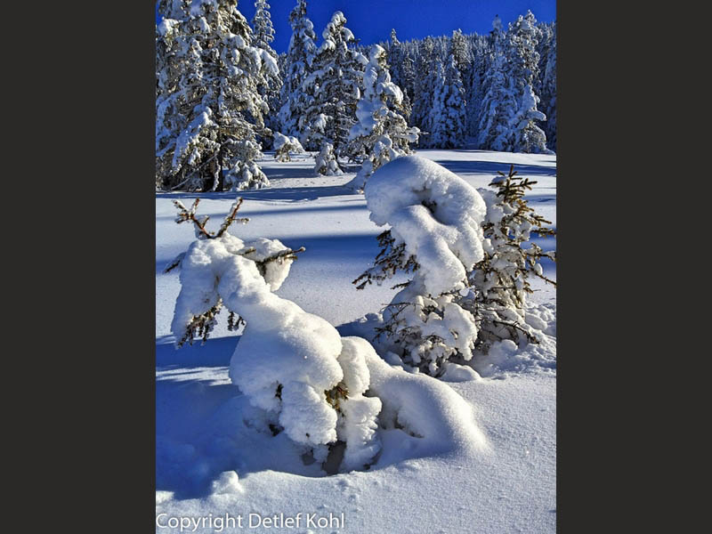 Fotografische Hochmoor Impressionen ? Tief verschneite Winterlandschaft am Glaubenberg